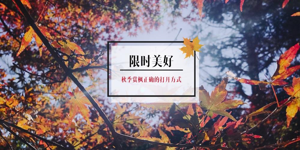 限时美好 秋季赏枫正确的打开方式