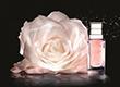 Dior玫瑰微凝珠精华 助你重焕年轻肌肤